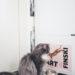 Eristyspäivä Finski-kissan kanssa